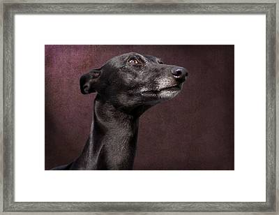 Framed Print featuring the photograph Beautiful Whippet Dog by Ethiriel  Photography