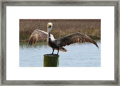 Beautiful Wings Framed Print by Paulette Thomas