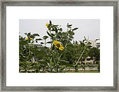 Framed Print featuring the photograph Beautiful Yellow Flower In A Garden by Ashish Agarwal