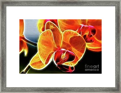 Beautiful Yellow Orchid Framed Print by Mariola Bitner