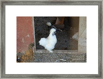 Beautifully Silkie Framed Print