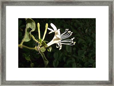 Framed Print featuring the photograph Beauty And The Beast 01 by George Bostian