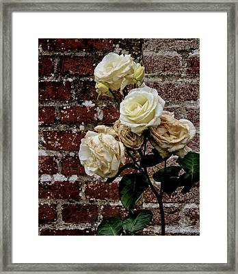 Beauty And The Beast Framed Print by Odd Jeppesen
