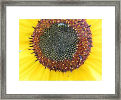 Framed Print featuring the photograph Beauty And The Ladybug by Tina M Wenger