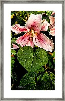 Beauty Framed Print by Christopher Holmes
