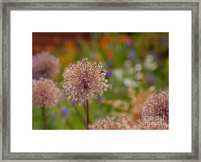 Beauty Clusters Framed Print by Mike Reid