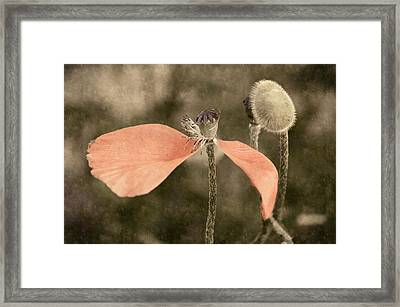 Beauty Fades Framed Print by Bill Pevlor