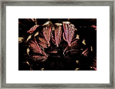 Beauty In Dark Framed Print by Terrie Taylor