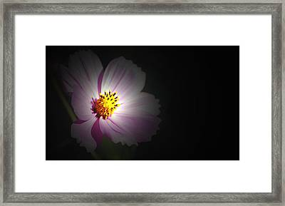 Framed Print featuring the photograph Beauty In Darkness by Amee Cave