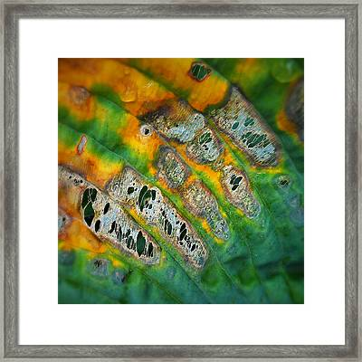 Beauty In Decay Framed Print by Paul Causie