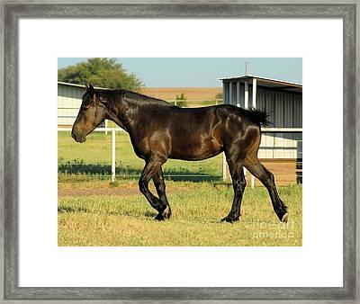 Beauty In Draft Horses Framed Print by Cheryl Poland