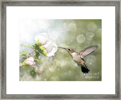 Beauty In Flight Framed Print by Sari ONeal