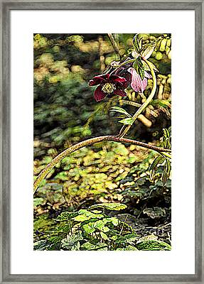 Beauty In Question Framed Print