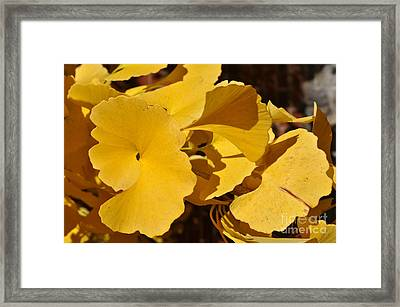 Beauty In The Leaves Framed Print by Denise Ellis
