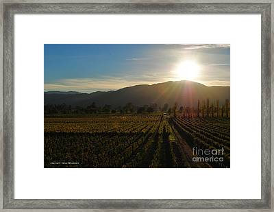 Beauty In The Vineyards Framed Print