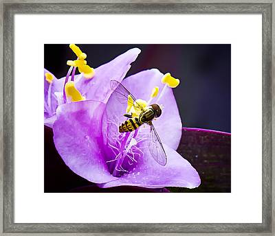 Beauty Invaded Framed Print by Michael Putnam