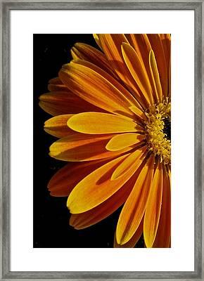 Beauty Framed Print by Jyotsna Chandra