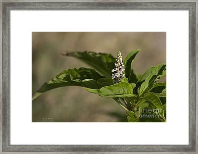 Beauty Of A Wildflower Framed Print by Deborah Benoit