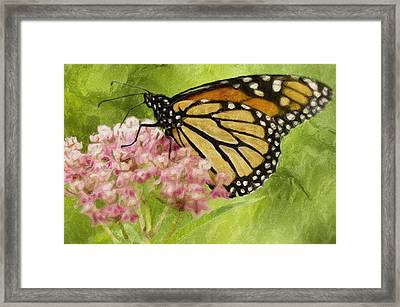 Beauty Of Nature Framed Print by Jack Zulli