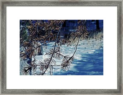 Framed Print featuring the photograph Beauty Of Simplicity by Janie Johnson