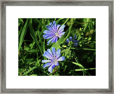 Beauty Of The Field Framed Print