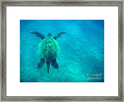 Beauty Of The Sea Framed Print by Bob Christopher