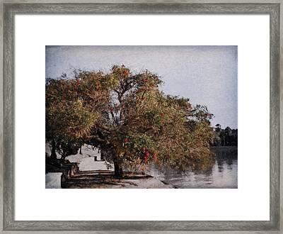 Beauty On The Path Framed Print by Diane Dugas
