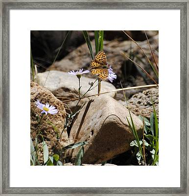 Beauty On The Rocks Framed Print by Meagan Suedkamp