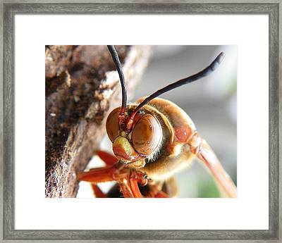 Framed Print featuring the photograph Beauty Queen by Chad and Stacey Hall