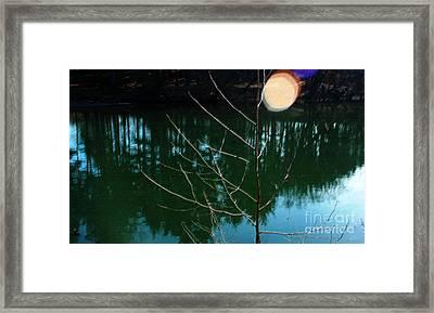 Beauty Spot Framed Print by Vilas Malankar