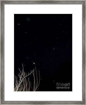 Beauty Unidentified Framed Print by Doug Kean
