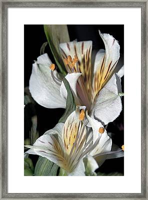 Framed Print featuring the photograph Beauty Untold by Tikvah's Hope