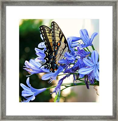 Beautyrest Framed Print by LC  Linda Scott
