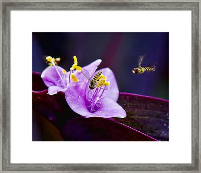 Beauty's Visitors Framed Print by Michael Putnam