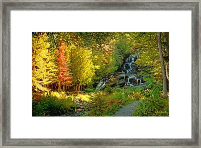 Beaver Brook  Framed Print by John Selmer Sr