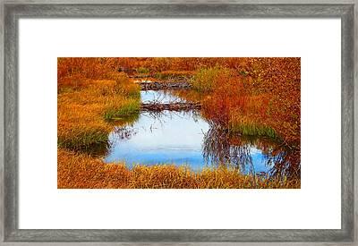 Beaver Ponds Framed Print by Terril Heilman