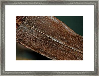 Beaver Tail Framed Print by LeeAnn McLaneGoetz McLaneGoetzStudioLLCcom