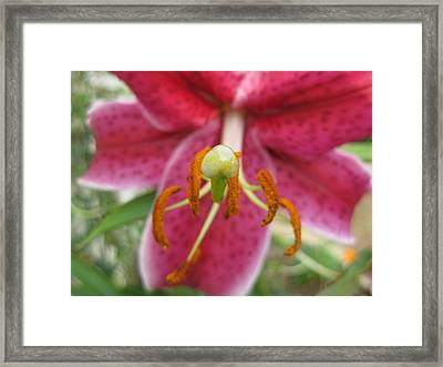 Beckoning Framed Print by Judy Via-Wolff