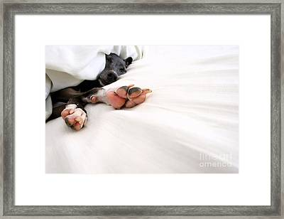 Bed Feels So Good Framed Print