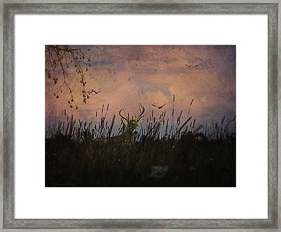 Bedding Down For Evening Framed Print by Lianne Schneider