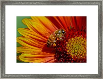 Bee 12 Framed Print by Mitch Shindelbower
