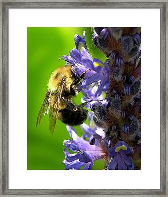 Bee All You Can Bee Framed Print