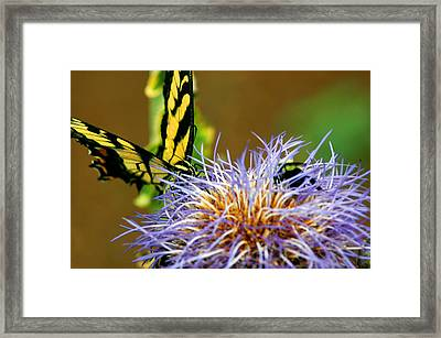 Bee And The Butterfly Framed Print