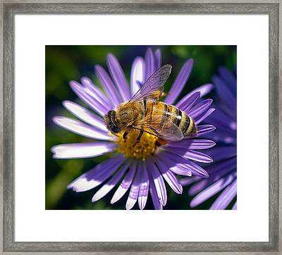 Framed Print featuring the photograph Bee by Anna Rumiantseva