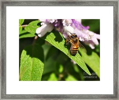 Bee At Work Framed Print by Kaye Menner