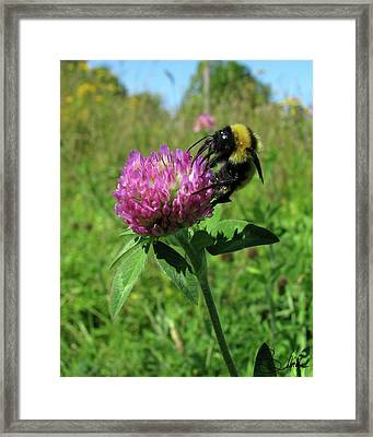 Bee-autiful  Framed Print by Sarah  Lalonde