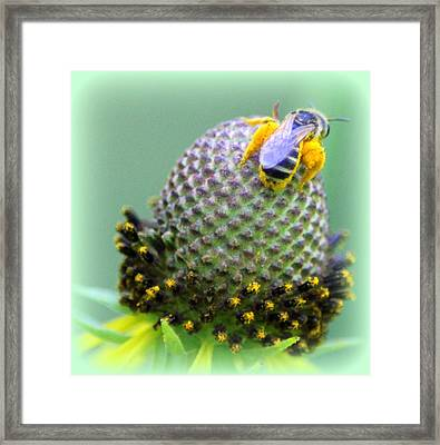 Bee Covered In Pollen Framed Print by Maureen  McDonald