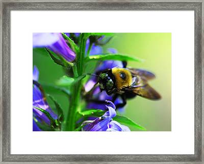 Bee Delight Framed Print
