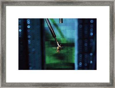 Bee Flight Simulator Framed Print