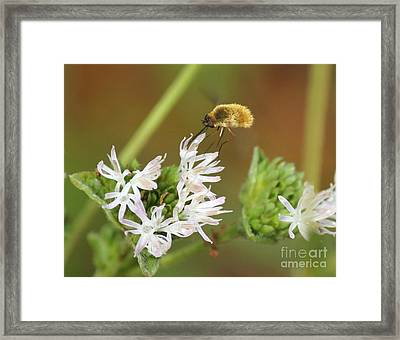 Bee Fly Don't Bother Me Framed Print